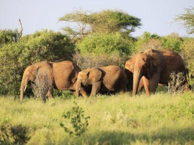 Photo of 1 ½ Days Tsavo East – Ashnil Aruba